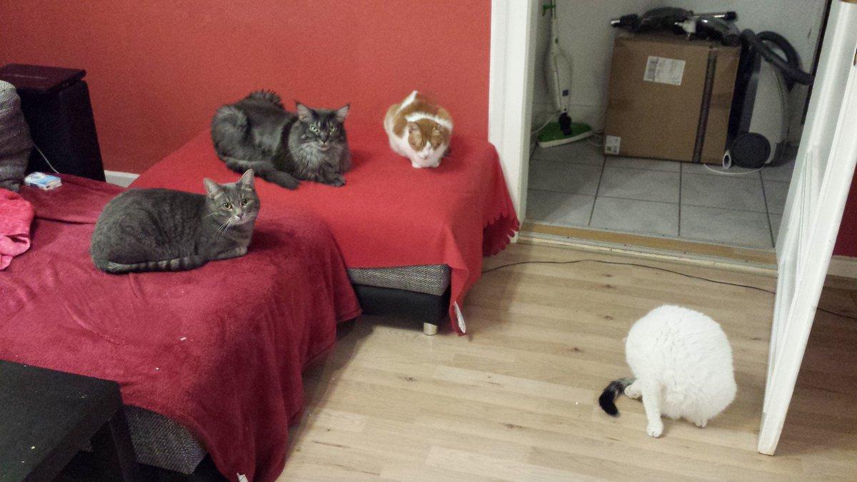 All four! <3