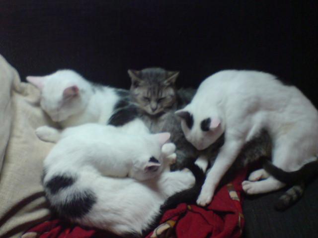 Kyon & die Kittenschar