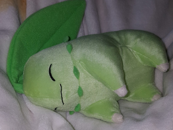Schlafendes Endivie