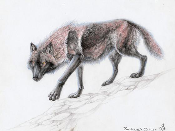 Wolfszeichnung