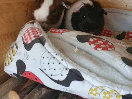 Krümel und Cookie