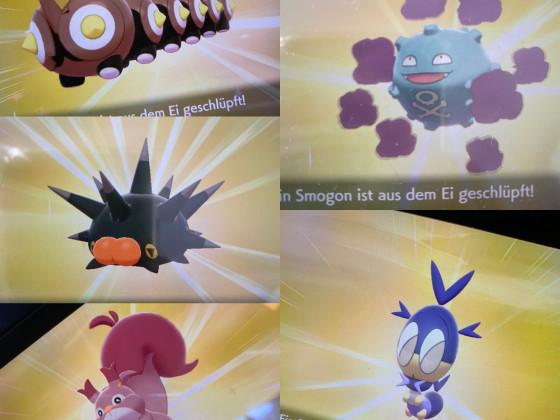 Wieder paar Gen. 8 Shiny's ✨