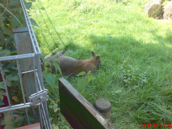 Ein Wallaby ^^