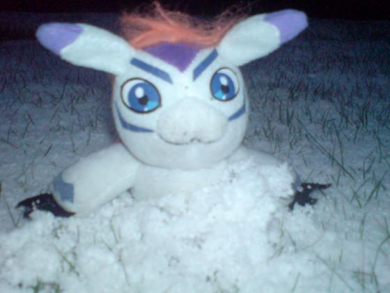 Goma im Schnee