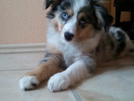 Mein Welpe - Luna (17 Wochen alt) :)