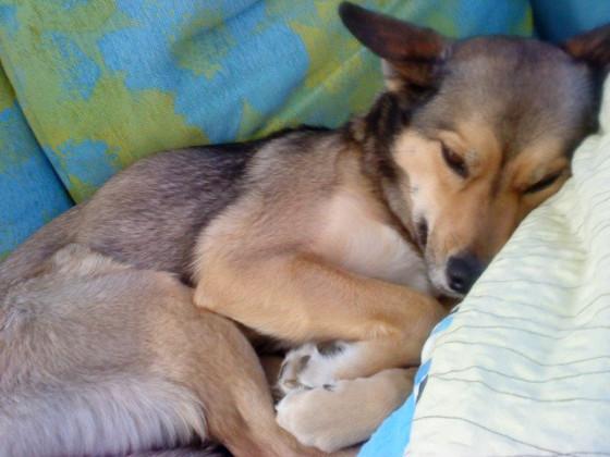 müdes Lunatier ist müde.