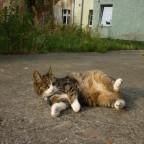 Meine Katze auf dem Hof