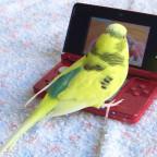 Pucky spielt Nintendo 3DS ( ✝ 07.07.2019 )