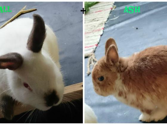 Meine Tierschutz-Hoppler x3