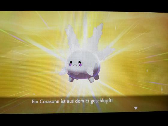 Shiny Corasonn
