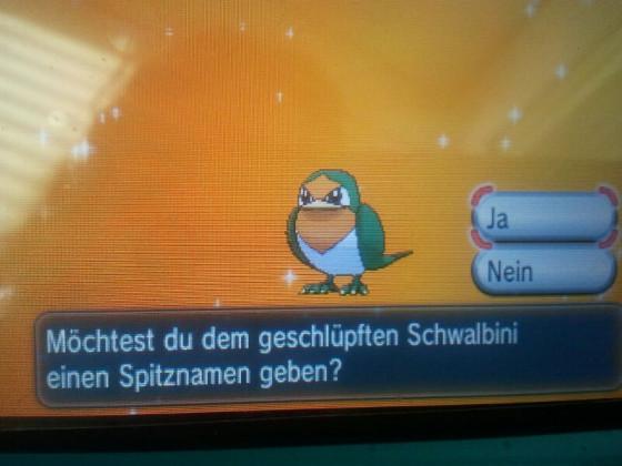 Shiny Schwallbini♥