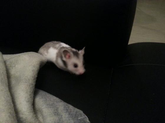 Pete auf seinem geliebten Sofa