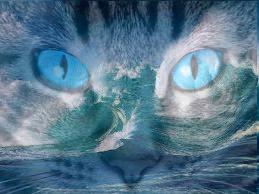 Warrior Cats Avatere (bisschen bearbeitet)