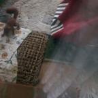 Ohjeee eichhörnchen familie auf dem Balkon :o)