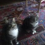 Katzen? GLOTZEN!!