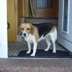Luna an der Haustür