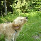 Ein Hund aus dem Tierheim <3