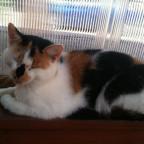 Meine Katze^^