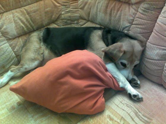 Sheila auf der Couch