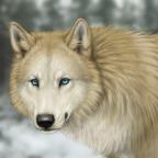 Akira ~ Winter is here