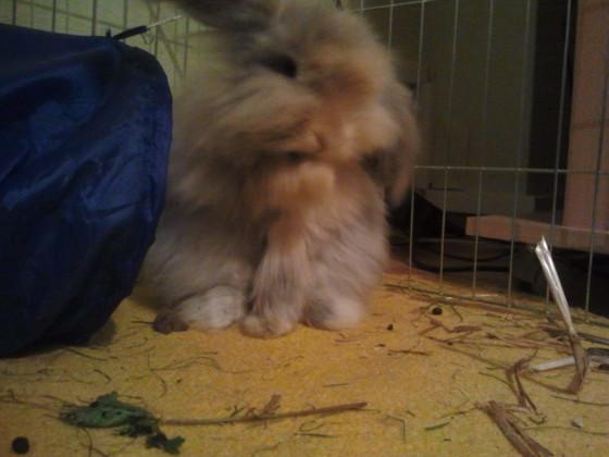 Mein Kaninchen - Toffie. :)