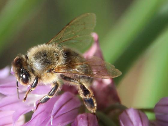 Das mit den Bienchen und den Blümchen...