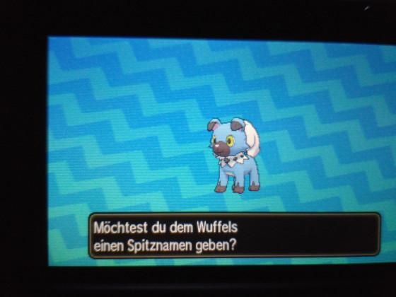 Shiny wuffels
