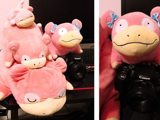 neues Mitglied meiner Slowpoke-Family