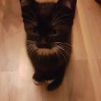 Baby Kitten 1