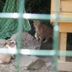kuschl spricht mit einer katze^^