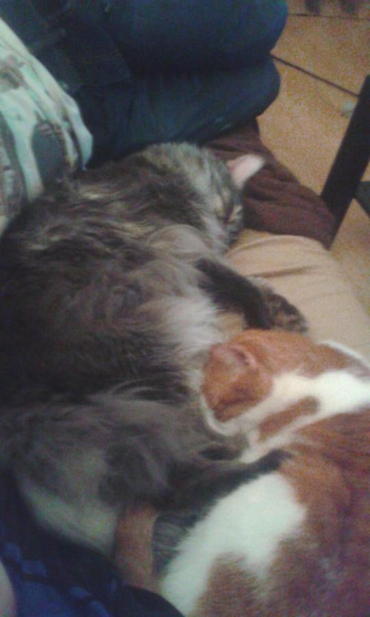 Smokey & Lilly