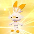Shiny Hopplo ♥