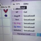 5*31 DV Ditto