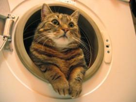 Die Katze in der Waschmaschine