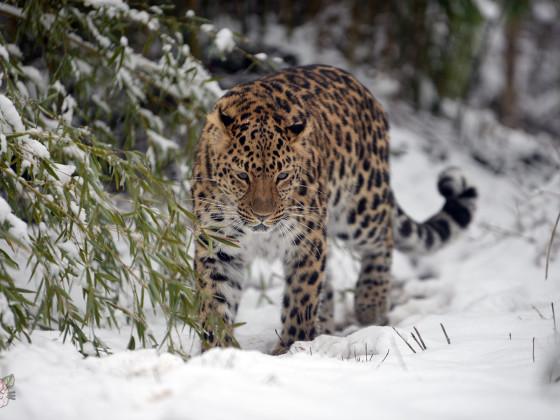 ABC die Gadse lief im Schnee