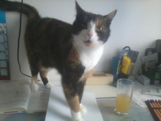 :3 Nerv-Katze