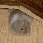 Mein Hamster Speedy