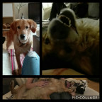 #4: Meet Baxter ❦