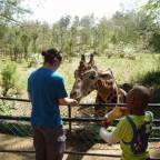 Penny in Nationalpark in Kenia