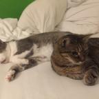 gechillte Katzen