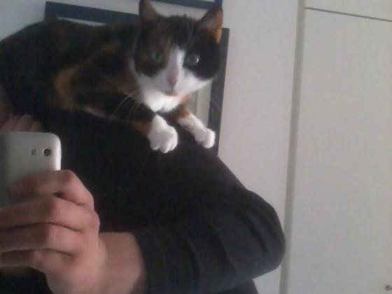 :3 Nerv-Katze auf meiner Schulter