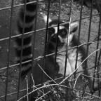 Imprisonment übderarbeitet