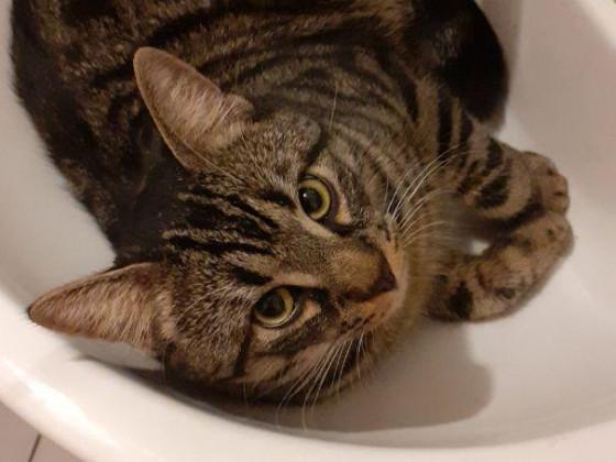 Cat in the sink