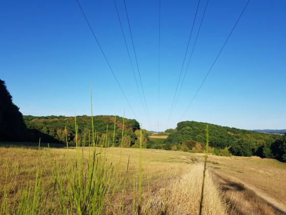 Landschaftsfoto mit Grünzeug vor Linse