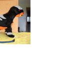 Benji als Hunduster