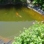 Gartensumpf,aber die Fischlies sind süß. Hautfarbener Goldfisch lol.