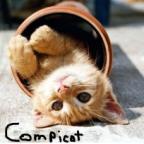 Cat-Geschenk