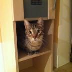 Meine Katze Finn, vorher war er in einem Tierheim.