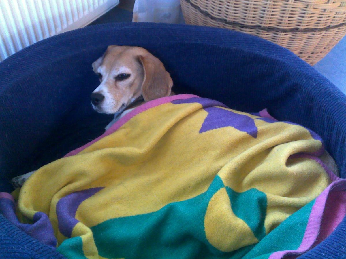 Sheila im Hundekorb