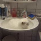 Snoopy im Waschbecken